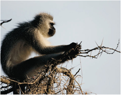 Monkeys in the Addo National Elephant Park. Addo game drives