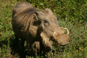 Addo wildlife. Woodall Addo accommodation and safari packages.