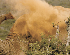 Addo Elephant Park accommodation. Addo safari accommodation package.