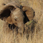 Addo National Elephant Park safaris and tours at Woodall Addo