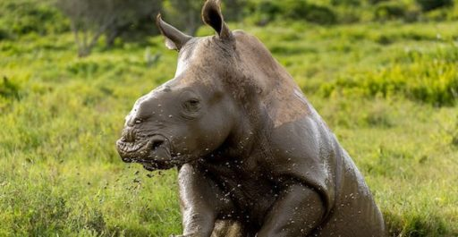 5 Animals to Spot at Addo Elephant National Park
