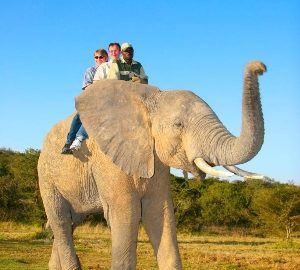 Elephant Back Safaris in South Africa