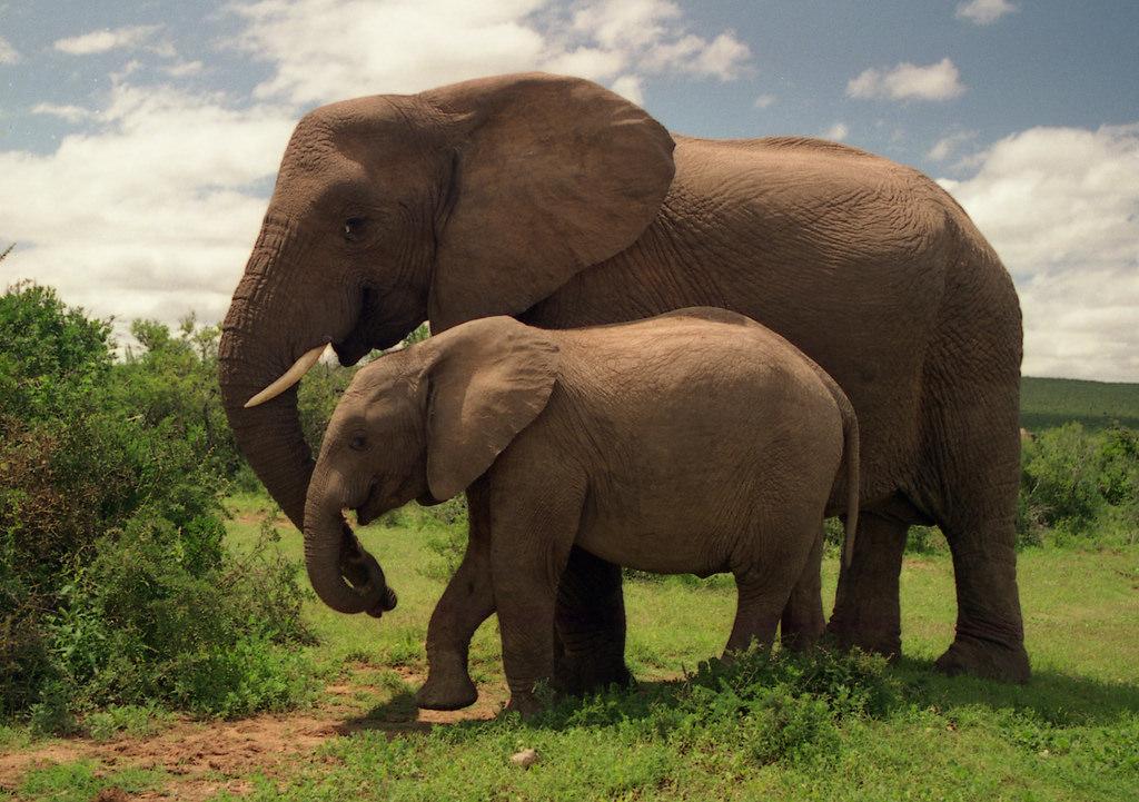 Amakhala Safari