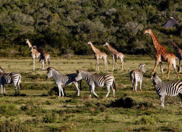 4 Reasons To Go On A Winter Safari Trip in South Africa